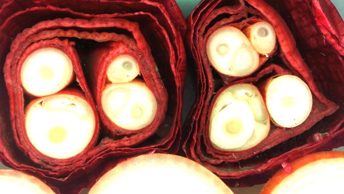 Rote Zwiebeln mit Blütenstielen im Schnitt.