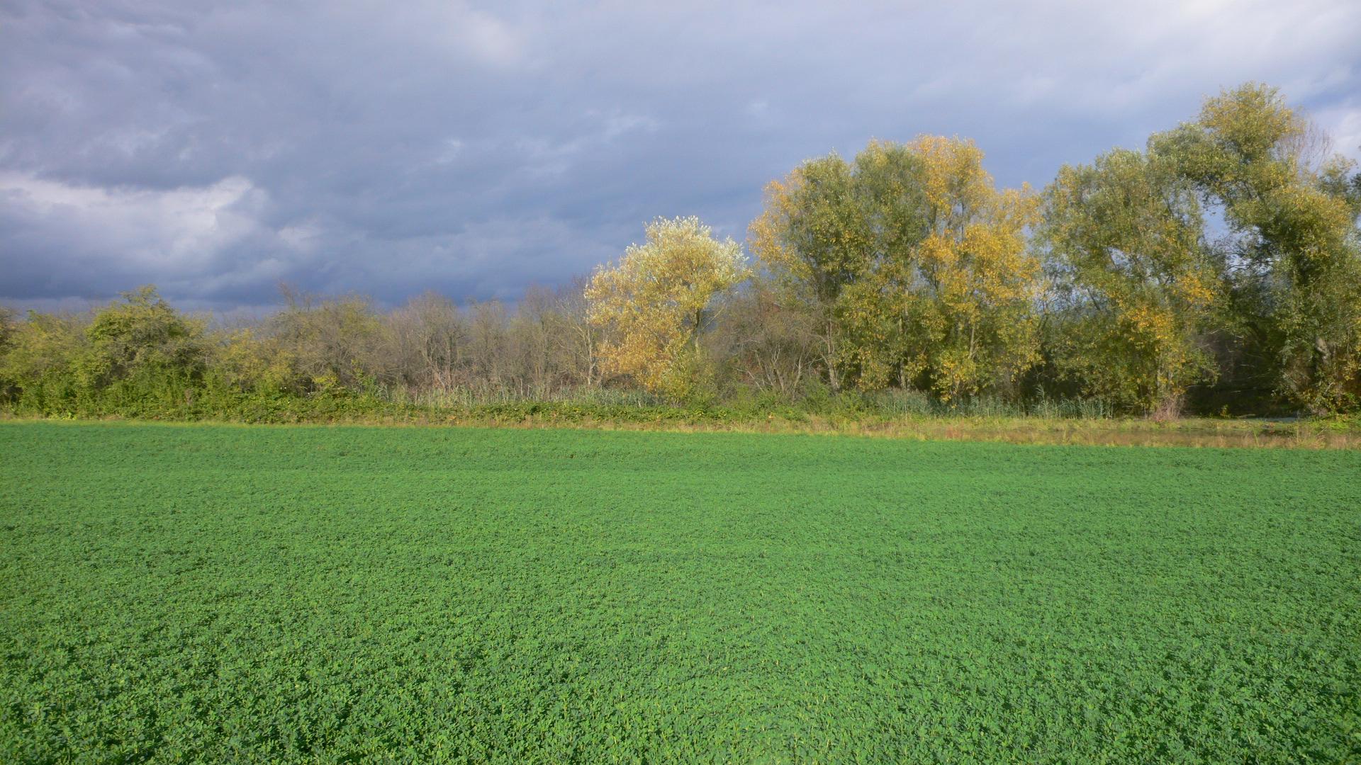 landwirtschaftliche Fläche im Norden von Heidelberg