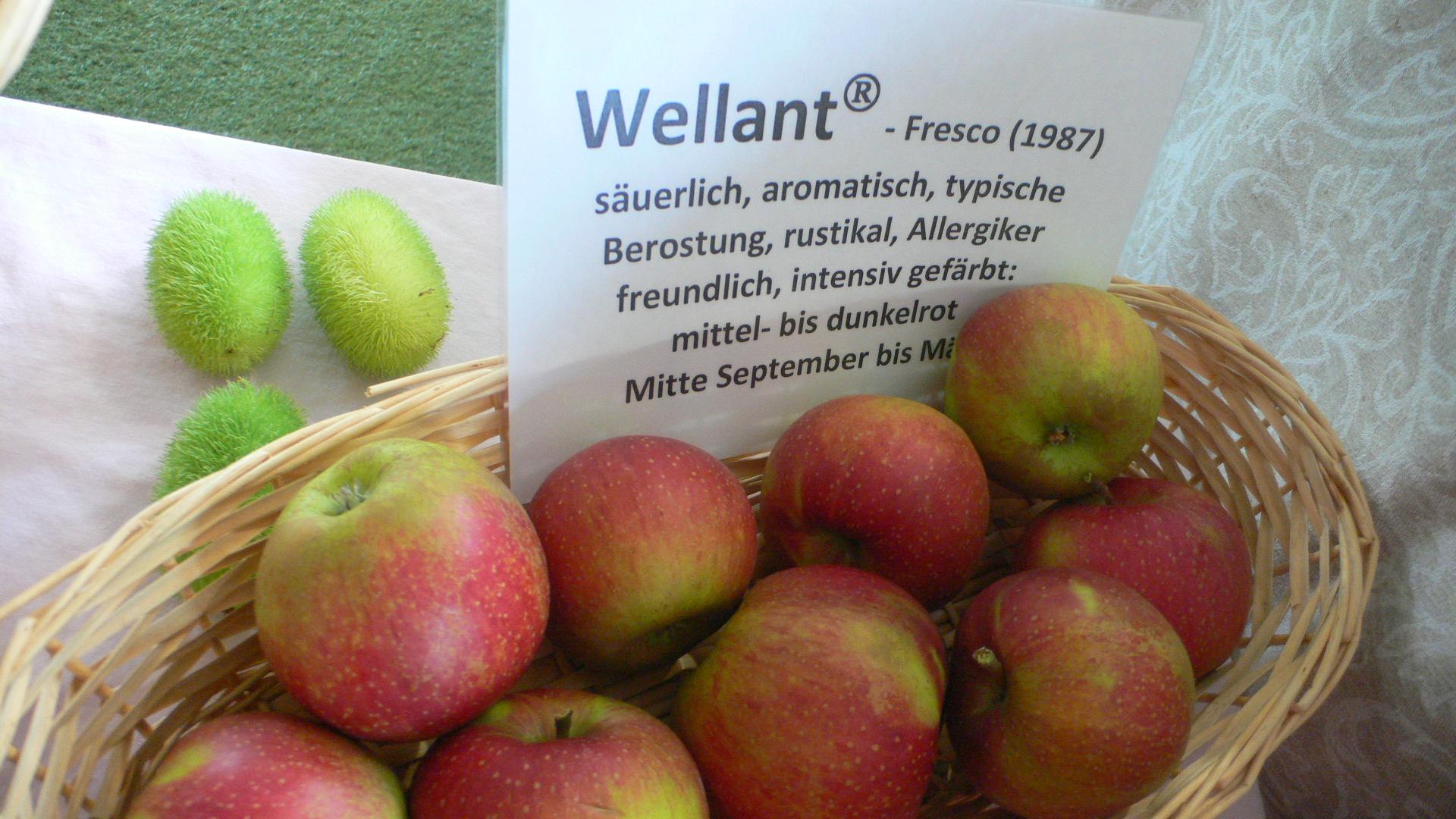 Apfelsorte Wellant