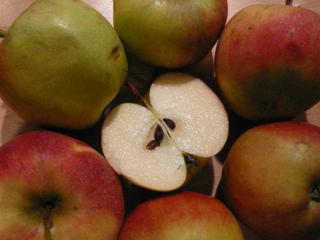Apfelfrüchte umschließen die Balgfrüchte mit den Samen.