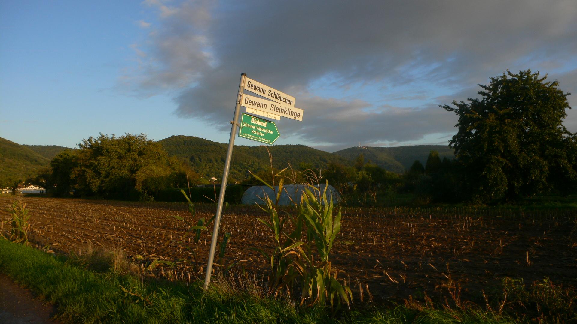 Beim Blick über die Felder sieht man den Odenwald.