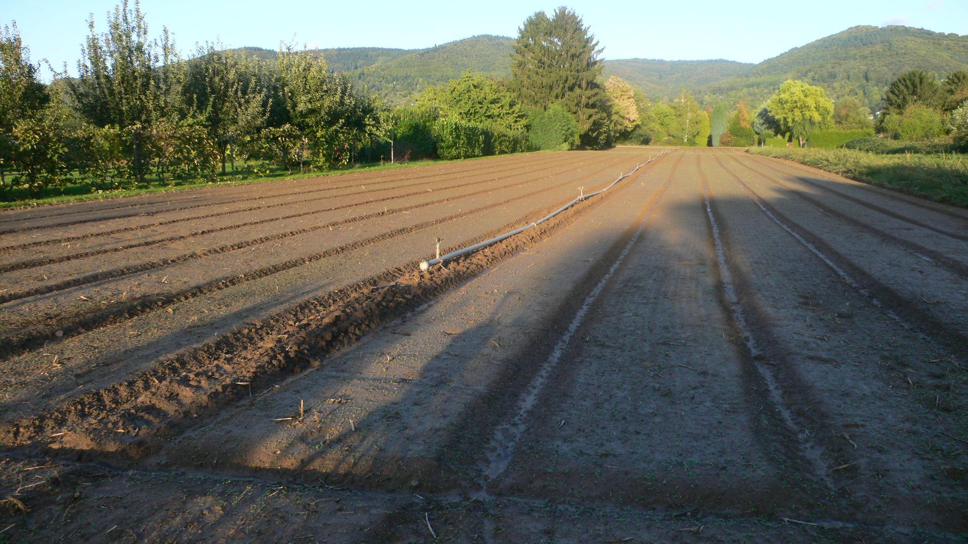 Nach der Ernte wird die nächste Aussaat vorbereitet.