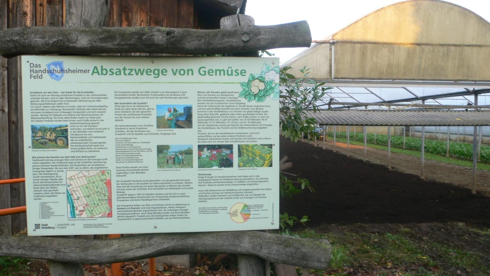 Infotafel im Feld zu Vertriebswegen von Gemüse