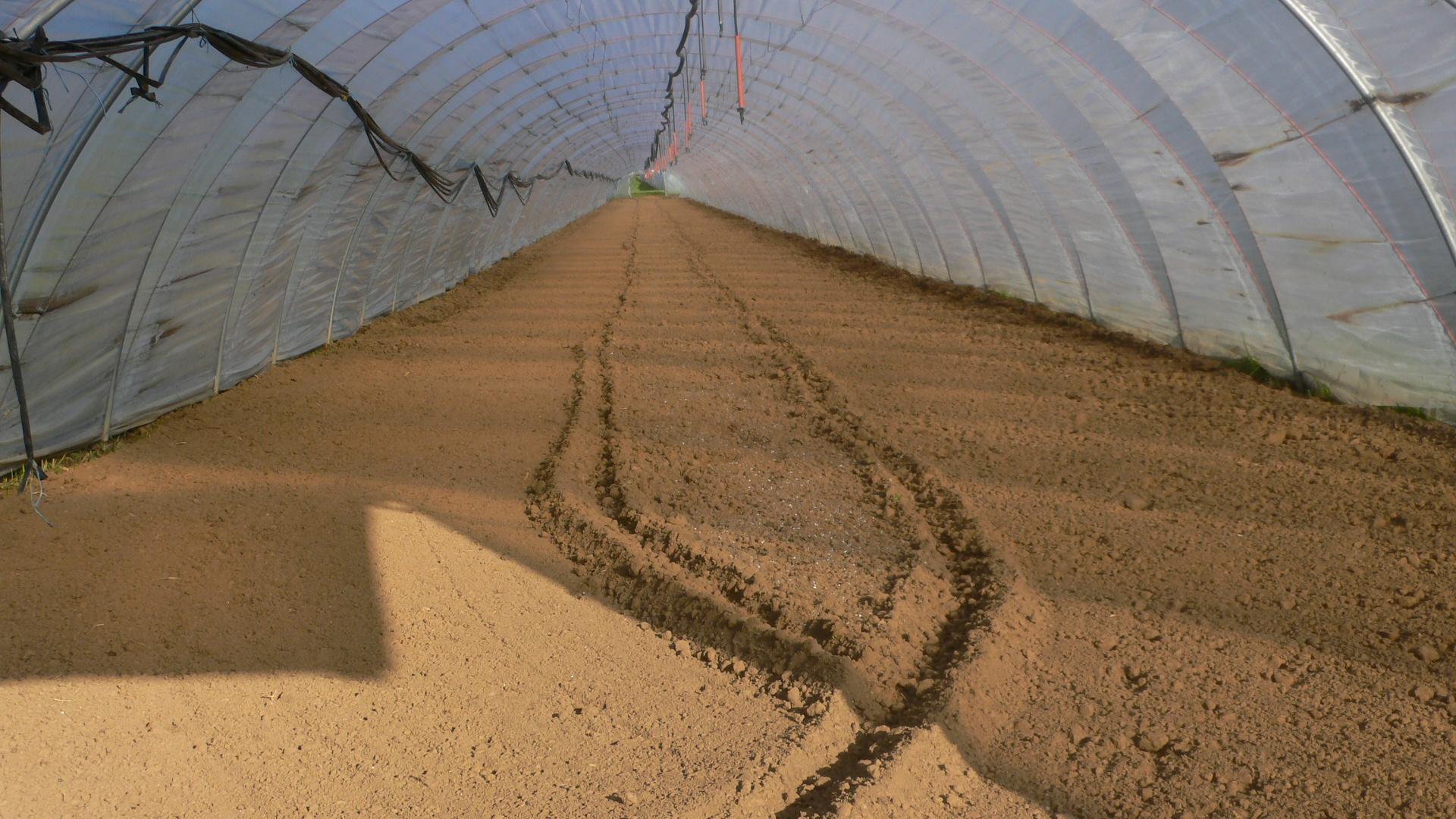 Konventioneller Anbau im Folientunnel wird vorbereitet