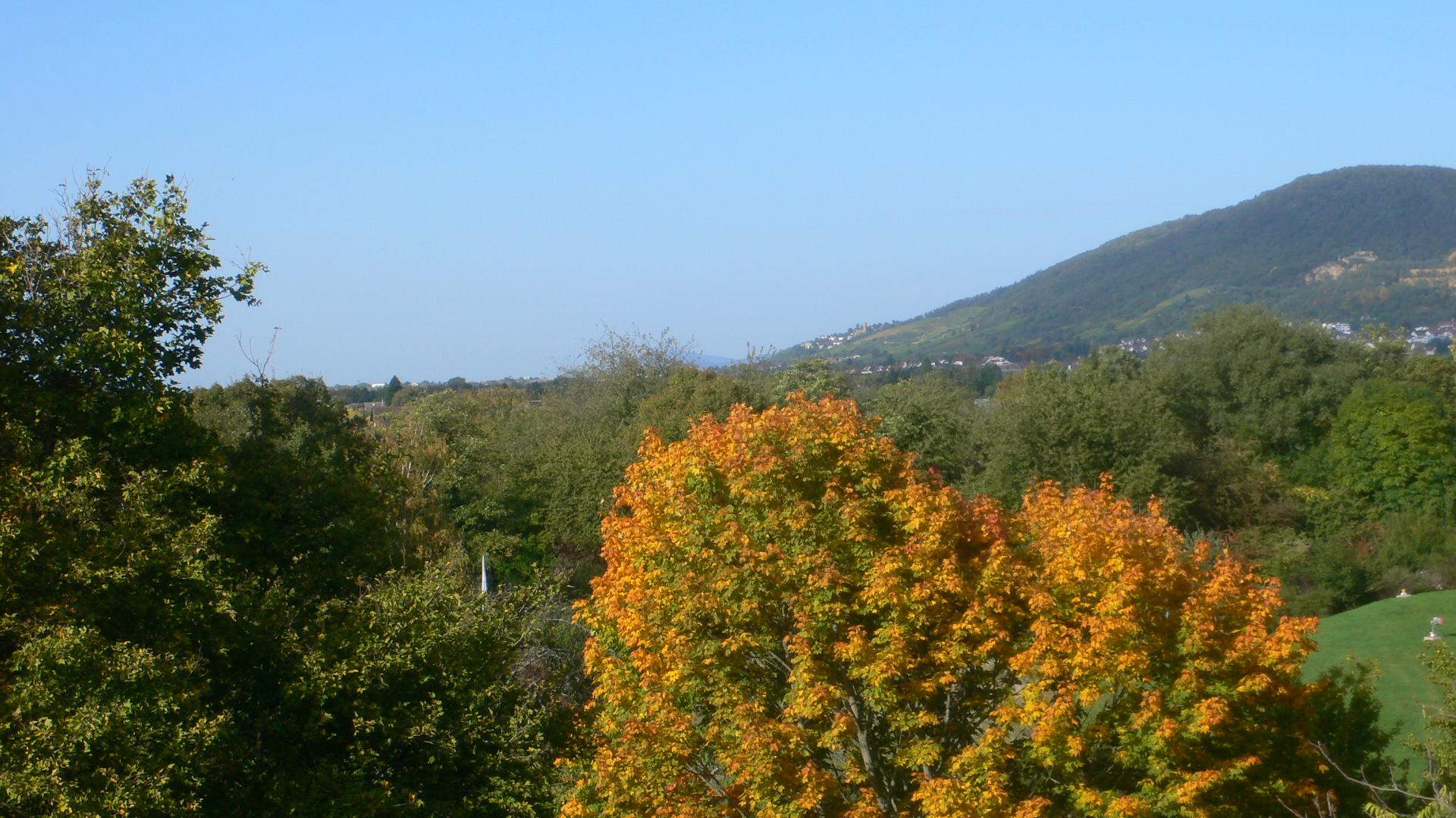 Blick auf die Felder Richtung Handschuhsheim