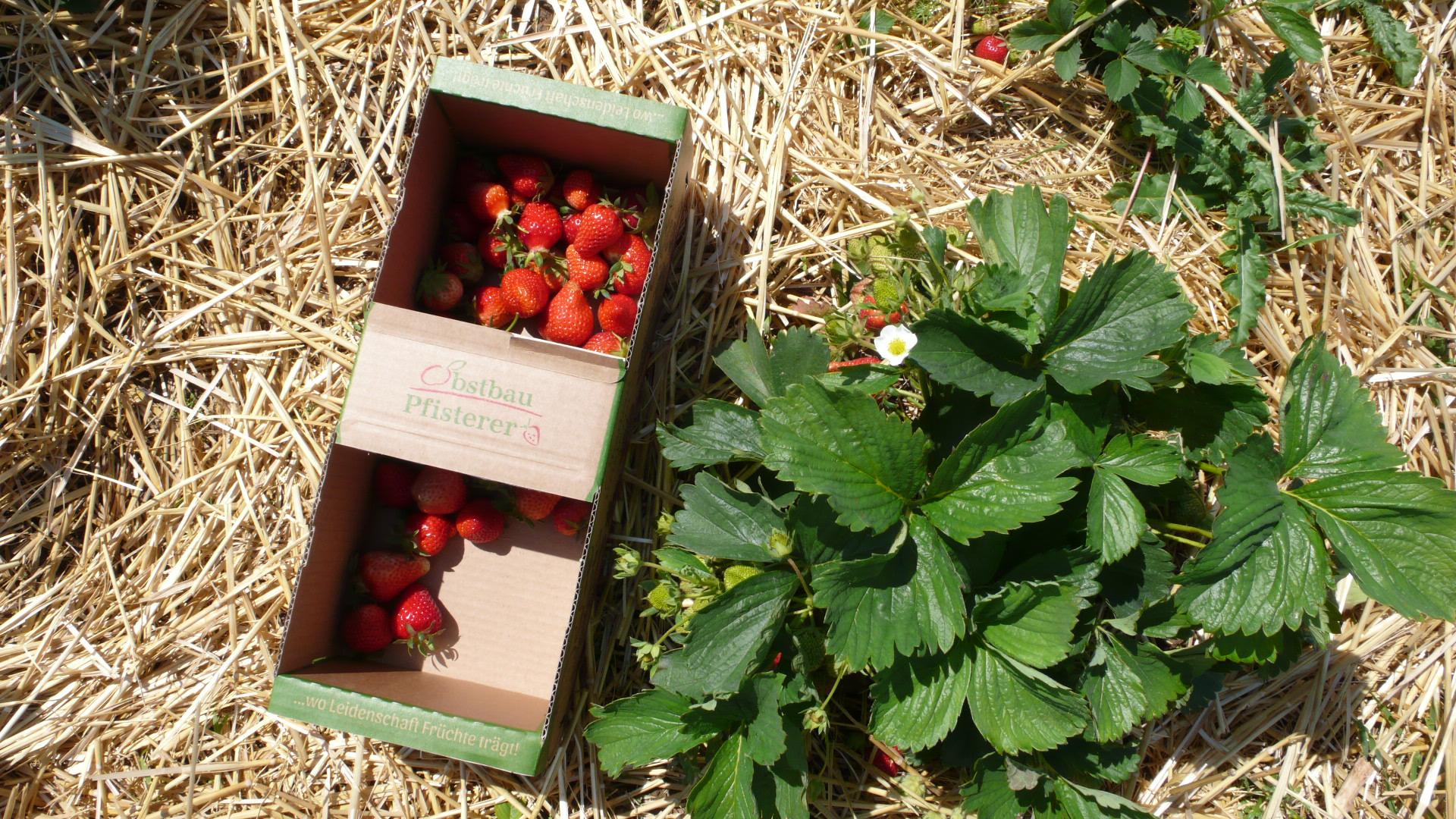 Angebot bei Obstbau Pfisterer