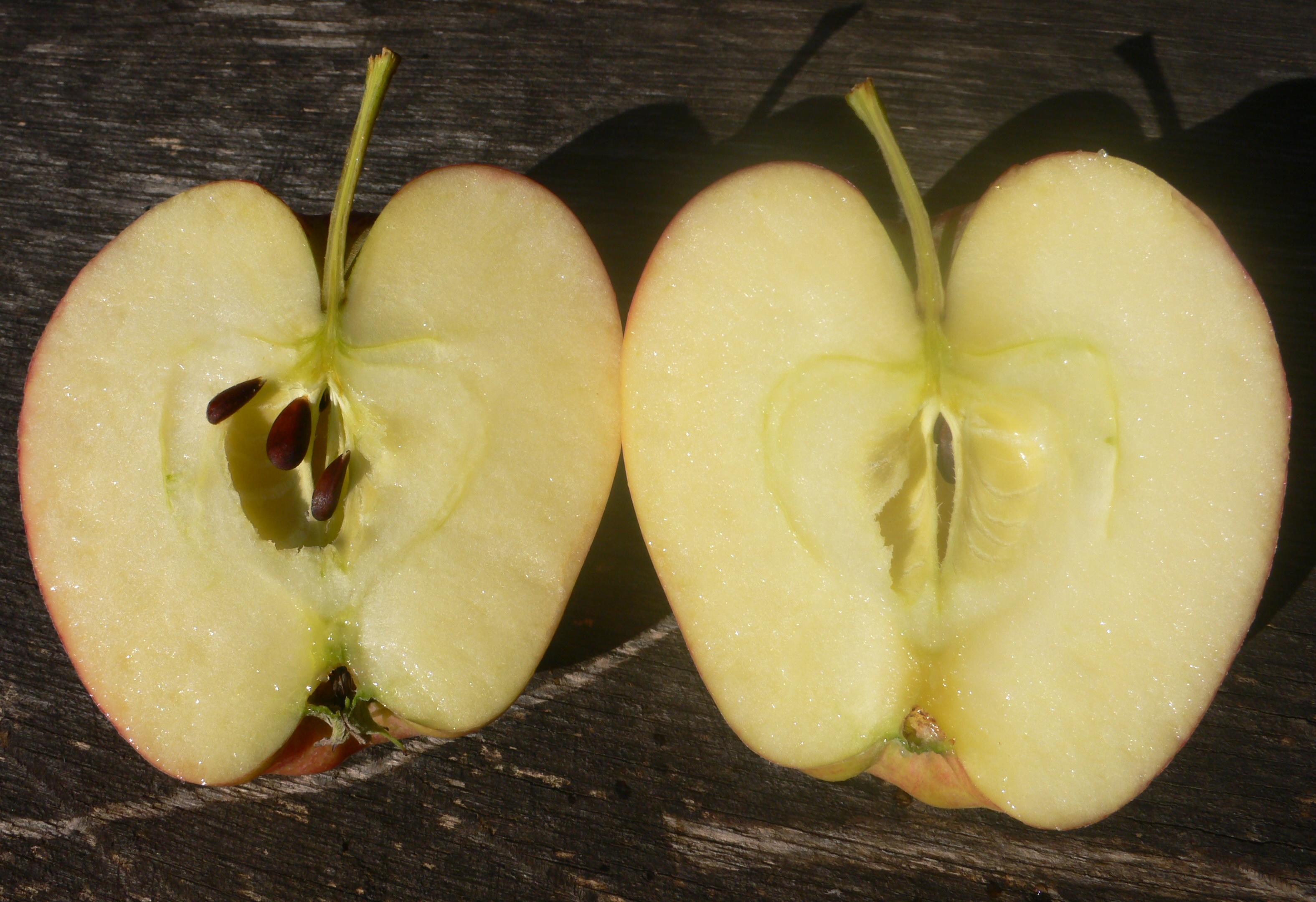 leckere Äpfel im Angebot