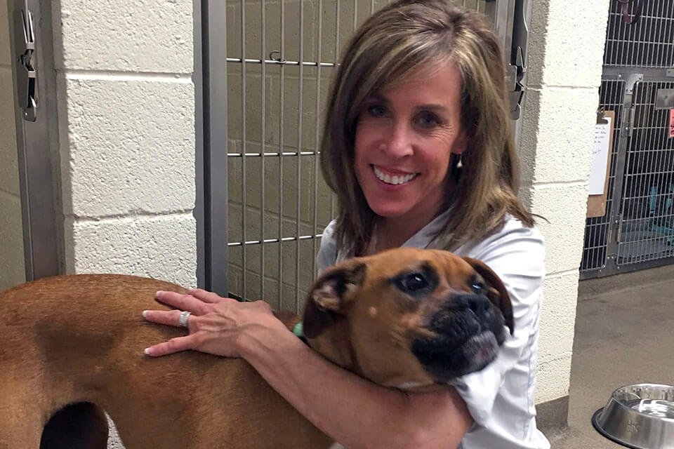 Boxer Luv Rescue steps to take if your dog goes missing
