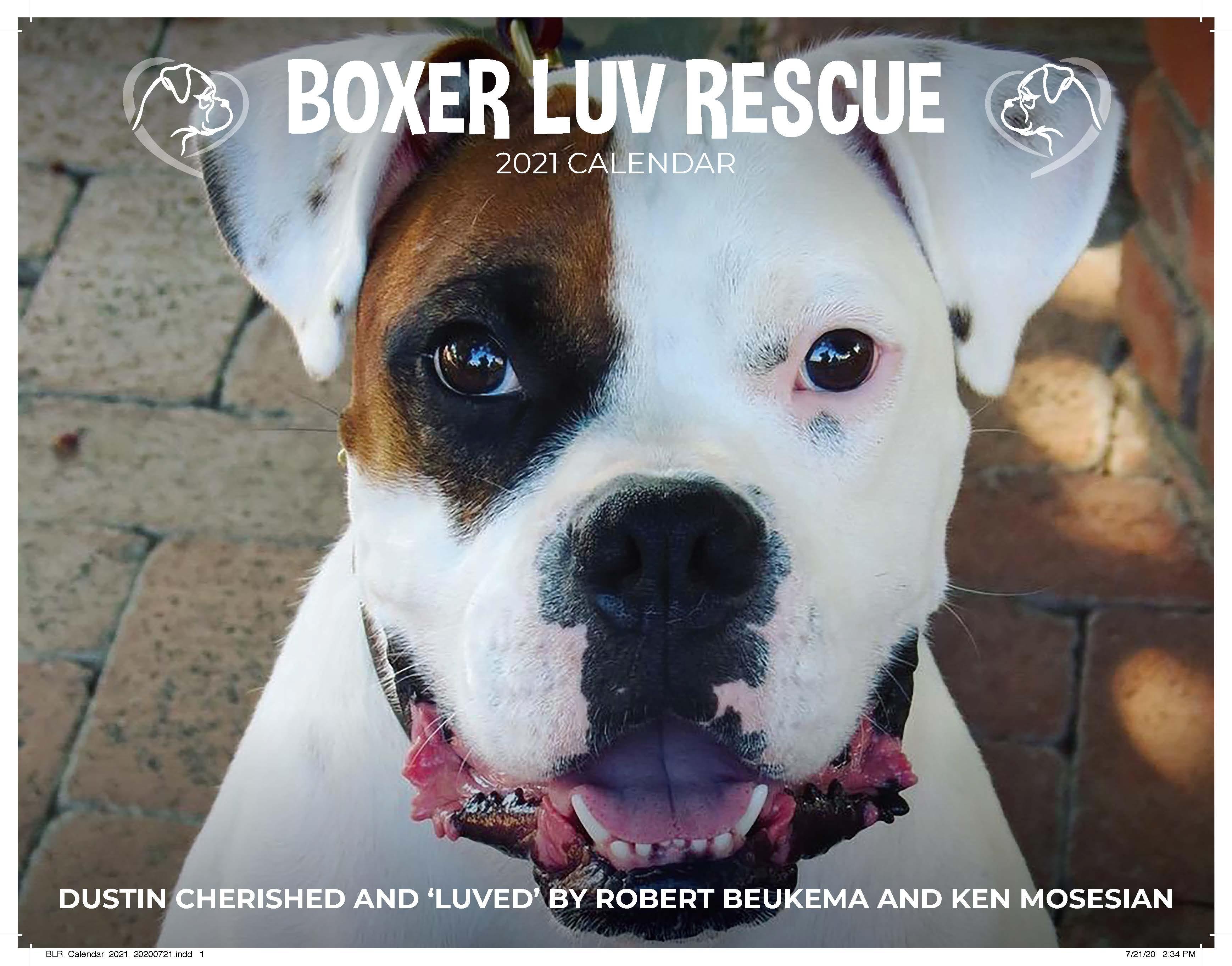 Boxer Luv Rescue annual calendar