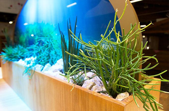 Sonderbau für Yogitea auf der Biofach