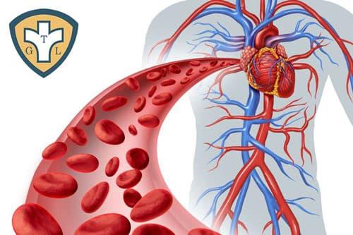 Bệnh giang mai lây truyền qua đường máu