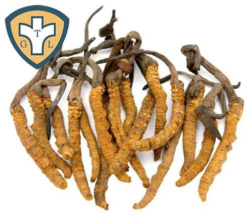 Các bài thuốc và món ăn chữa bệnh từ đông trùng hạ thảo
