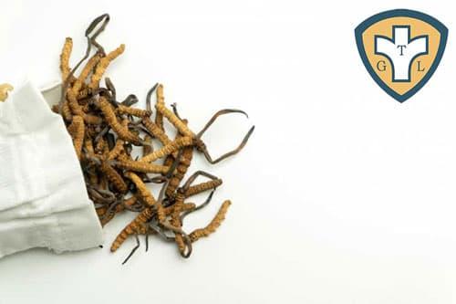 Đối tượng nào không nên dùng đông trùng hạ thảo