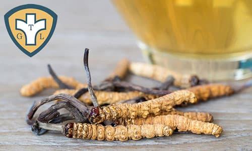 Trùng thảo phát sinh tương tác với thuốc Tây y nào?