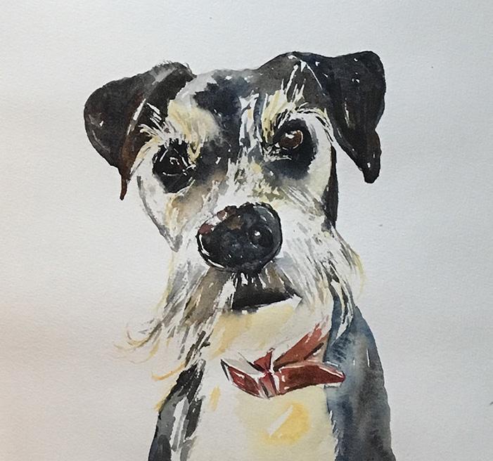 Rufus watercolour, painting by Maria Laffey