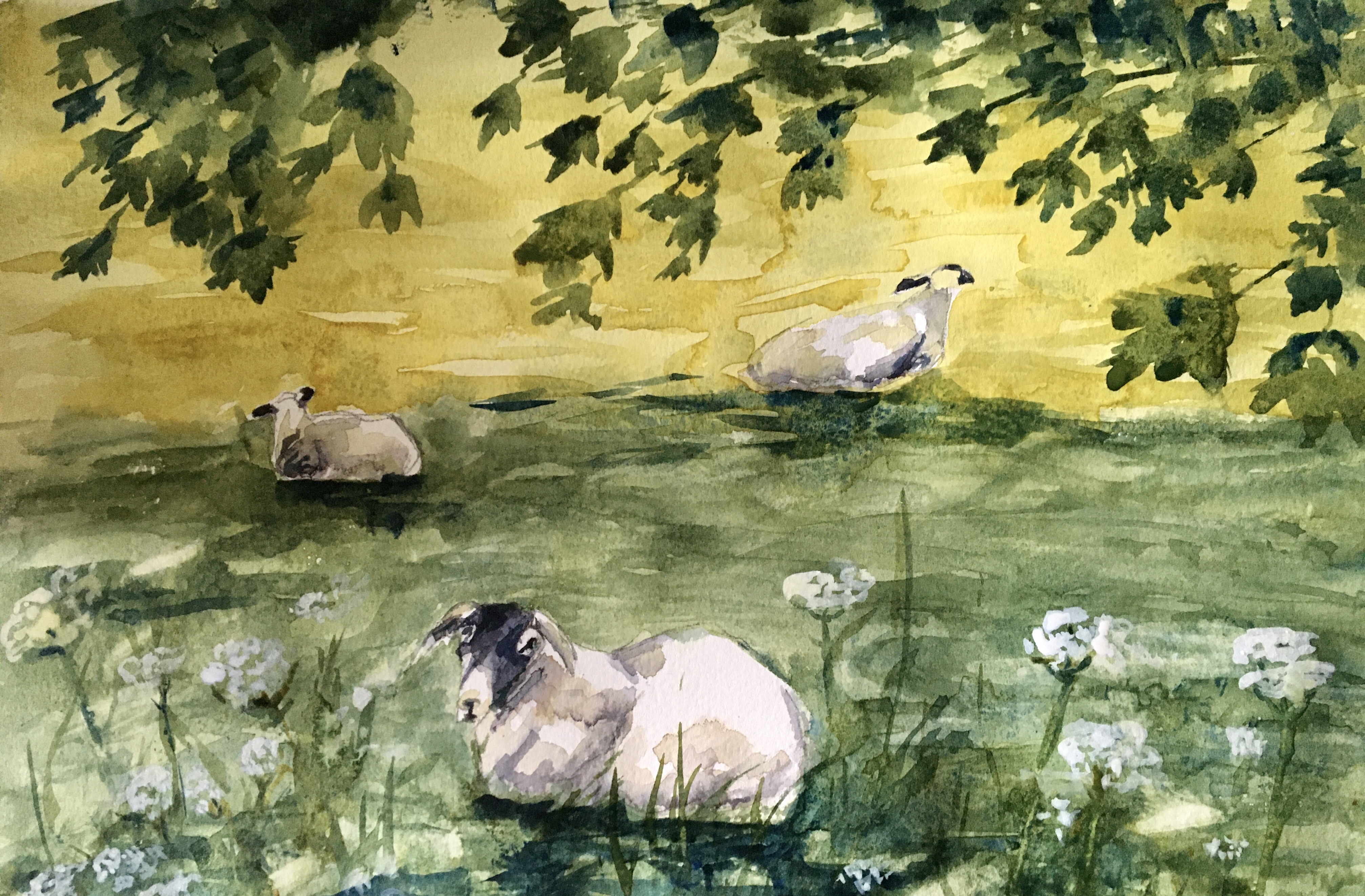 Watercolour of sheep under a tree yellow and green