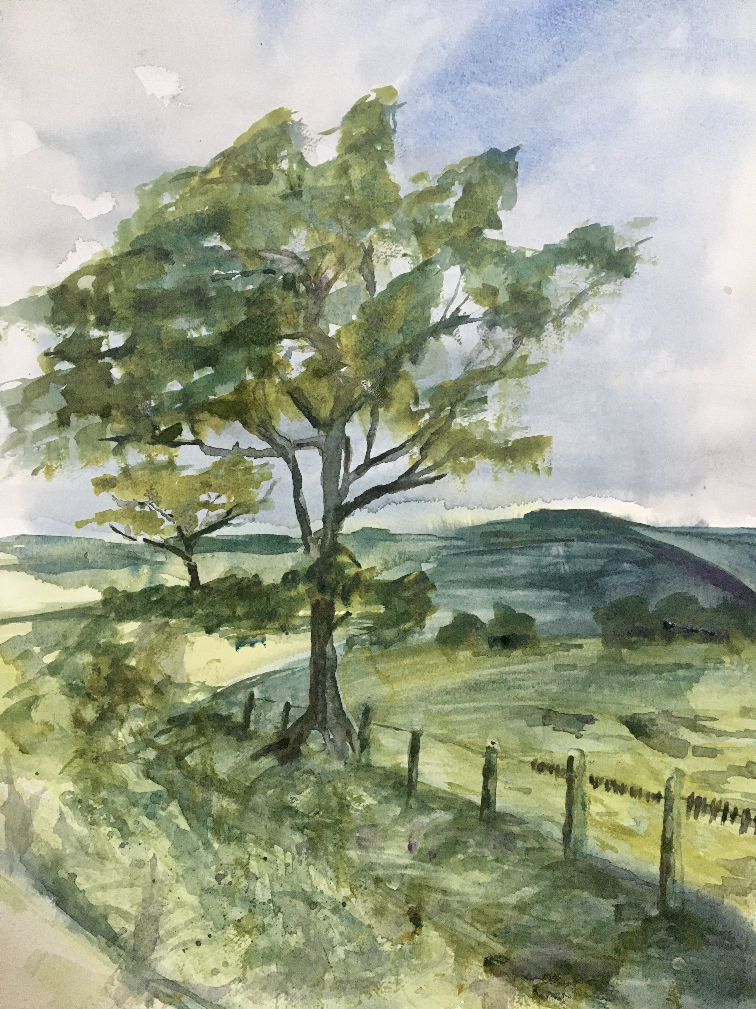 Watercolour of Northumberland country scene with a tree on a lane