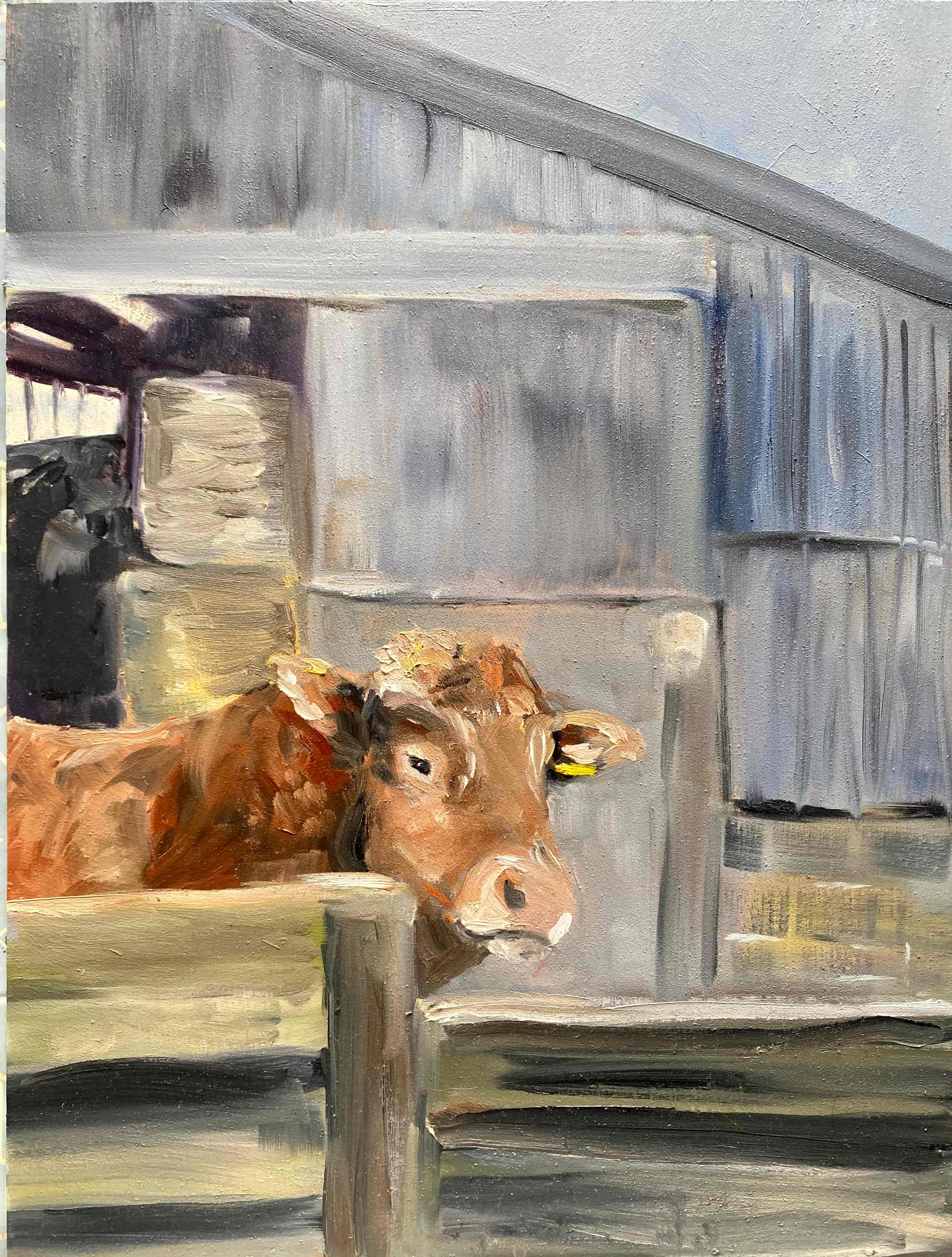 brown bull barn oil painting