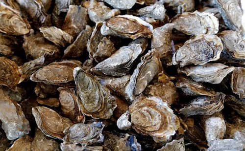 HÀU ăn thế nào 10 món hàu biển thơm ngon tốt cho sức khỏe