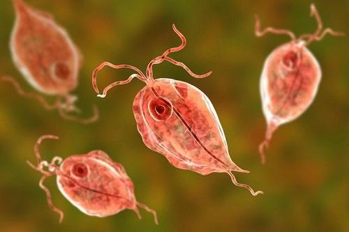 Bệnh viêm âm đạo là gì, nguyên nhân biểu hiện cách chữa 8