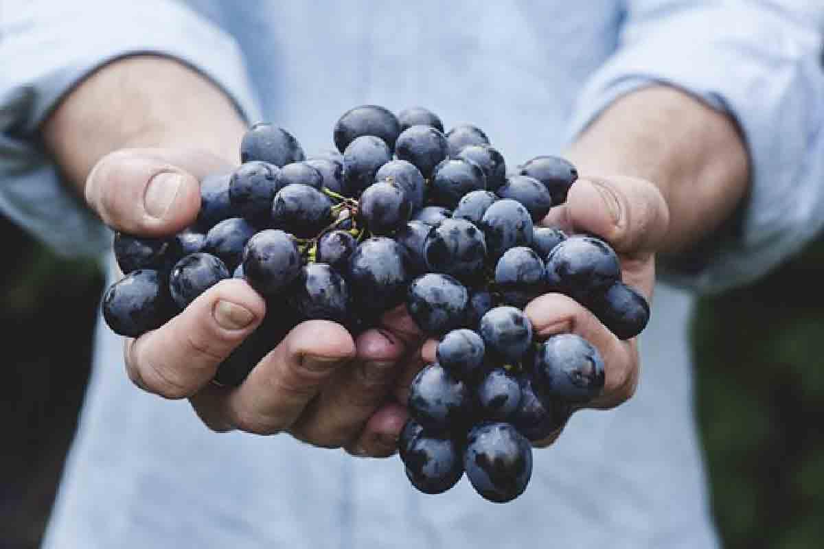 un ragazzo tiene in primo piano dei grappoli d'uva