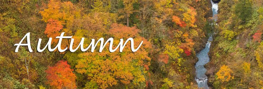 Autumn - 秋