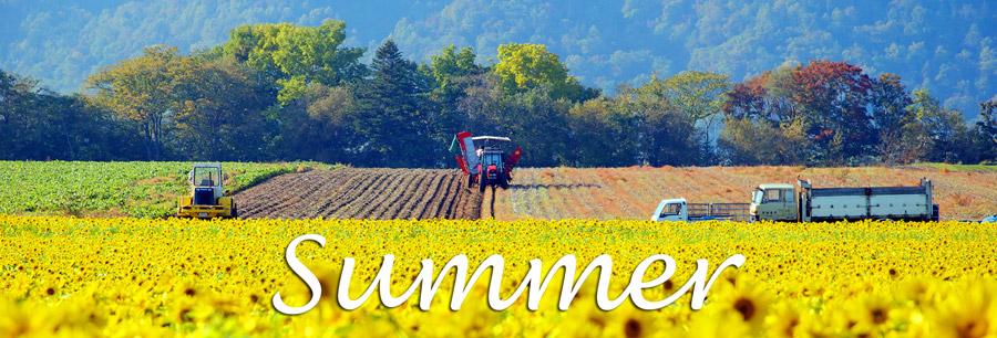 summer - 夏