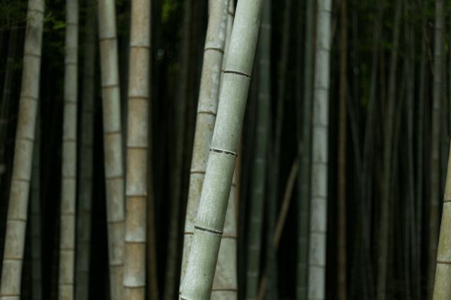 Bamboo pyjamas source