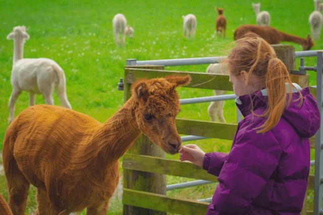 Scotland farm