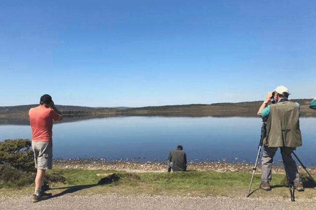 Scotland bird watching