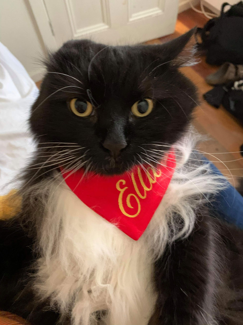 A photo of a cat, looking mad, wearing a neckerchief with one ear flopped down.