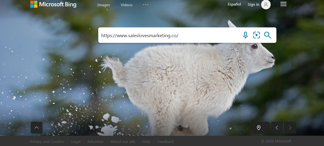 Microsoft Bing search engine, trying to search for sales loves marketing