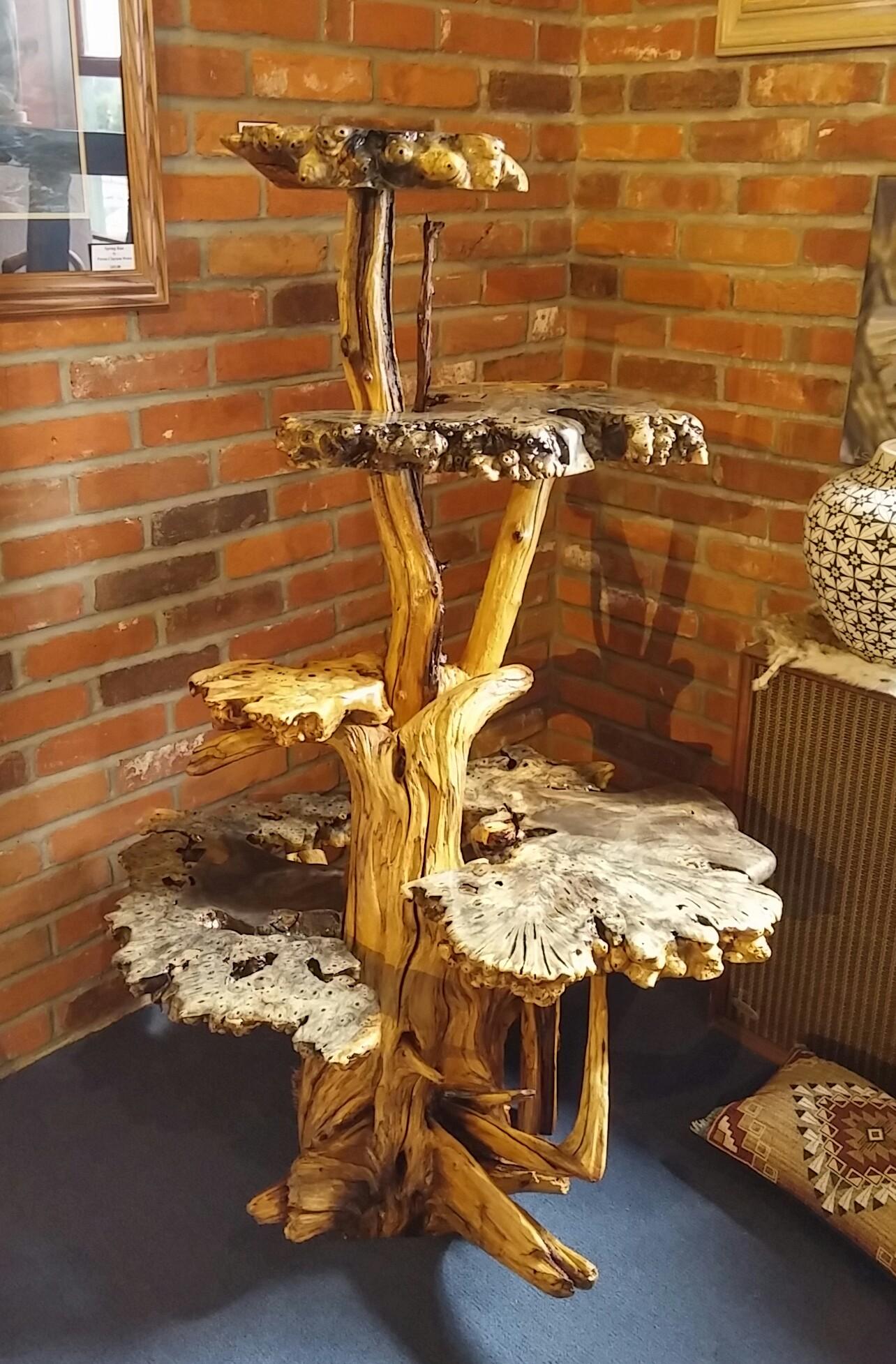 California Buckeye burl on oak display
