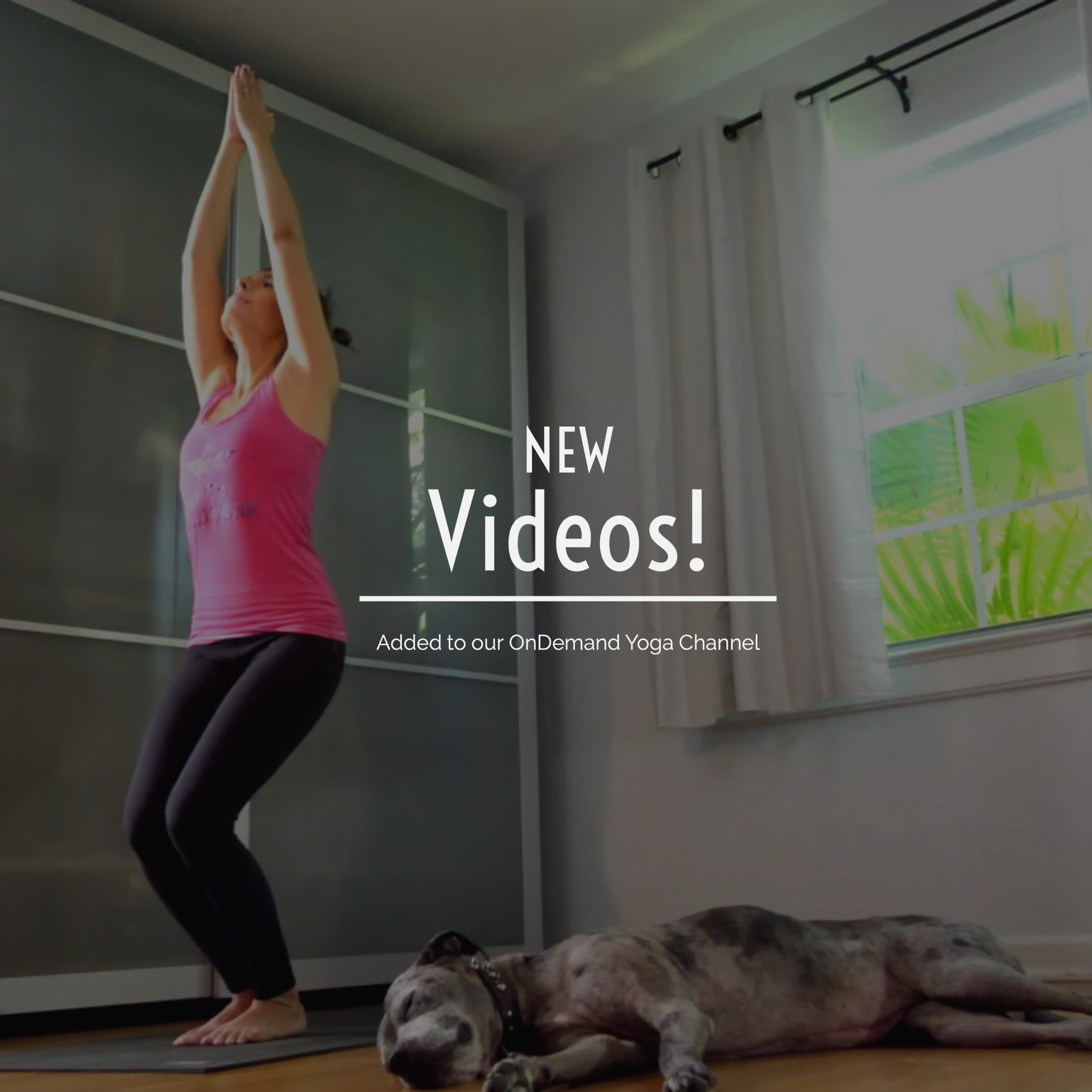 The OnDemand Yoga Channel is getting a facelift! It's now easier than ever to find that fave T&C class you love!
