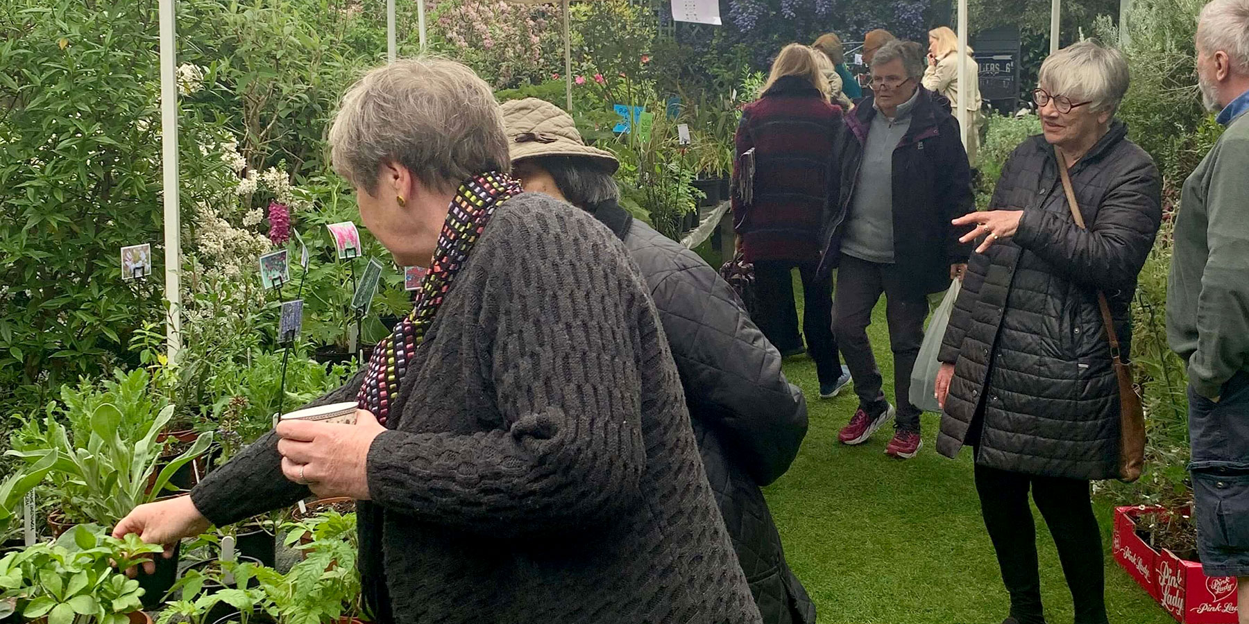 Charity plant sale garden stalls, in aid of brain research
