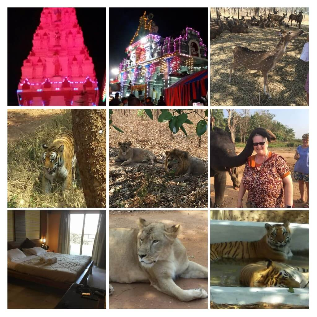 Tiger & Tusker trails photo collage of deer & lions