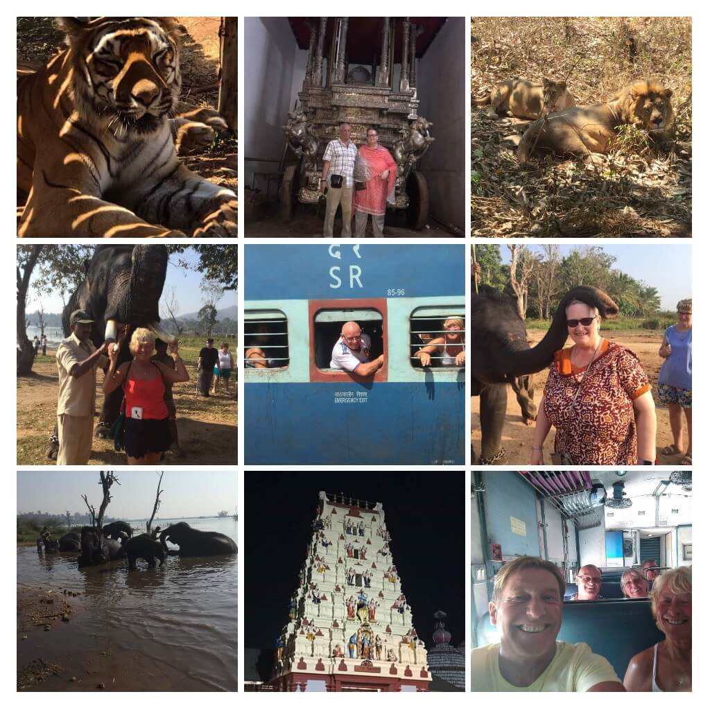 Tiger, lions & elephants rehabilitation centre
