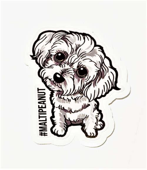 furry family dog doggie maltis peanut