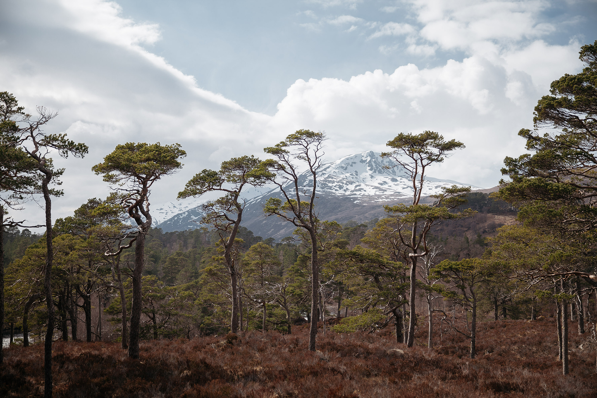 Early spring in the Highlands. A snowy Sgurr na Lapaich framed by Scots Pine.