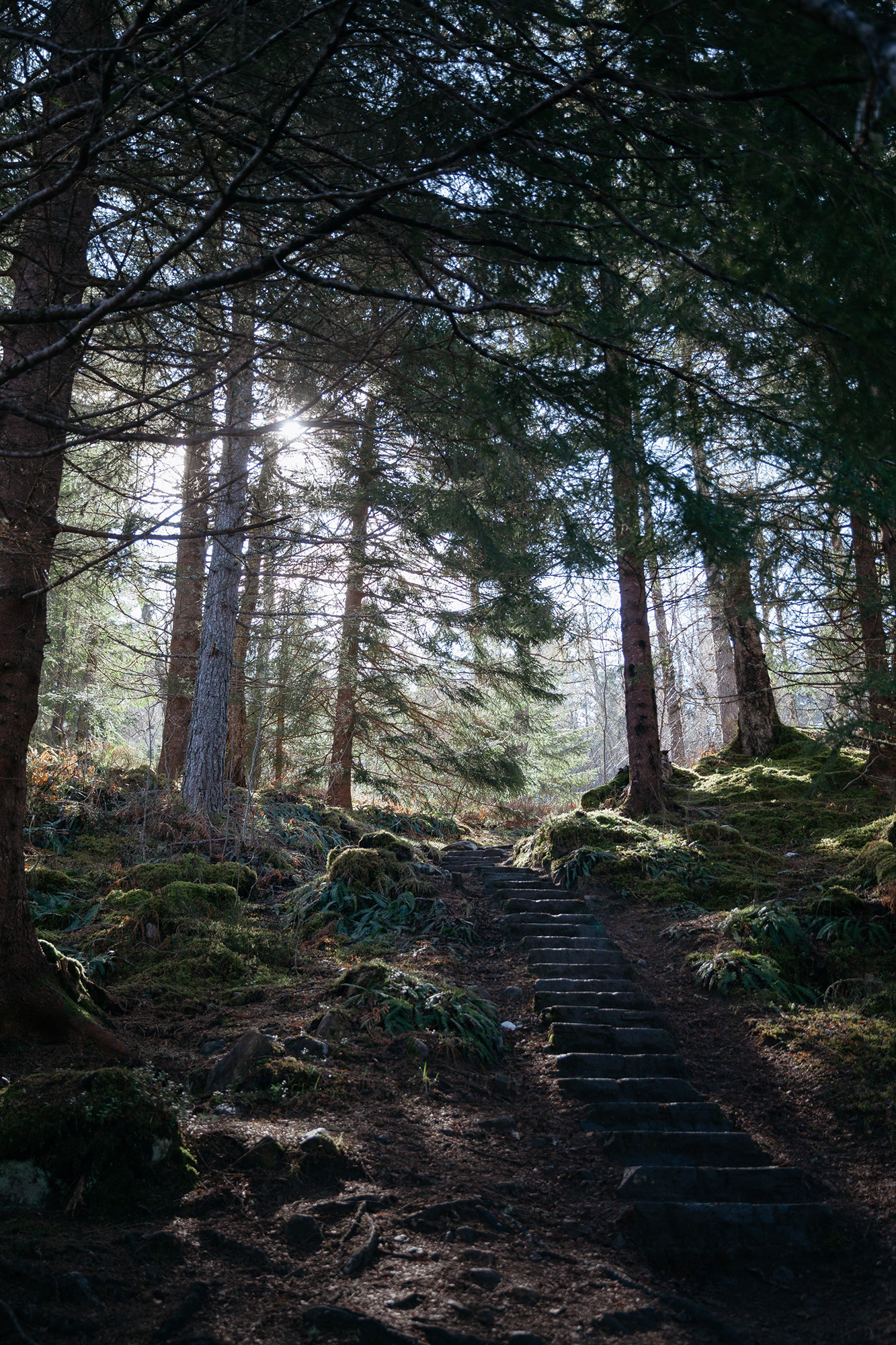 Mid-morning sun streaming through old growth pine forest onto stone steps.