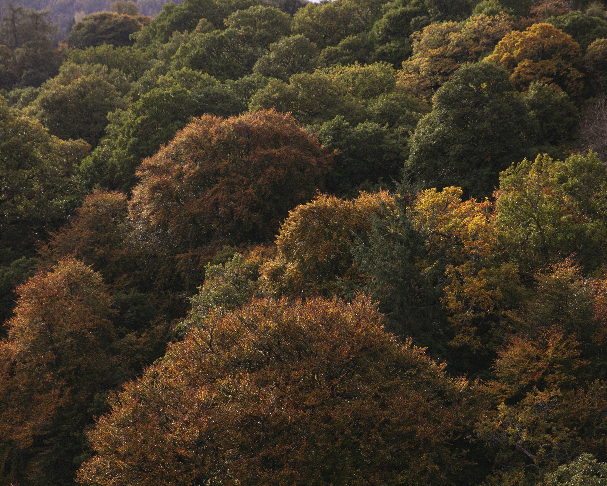 Autumnal trees in shades of orange, yellow, brown and green.