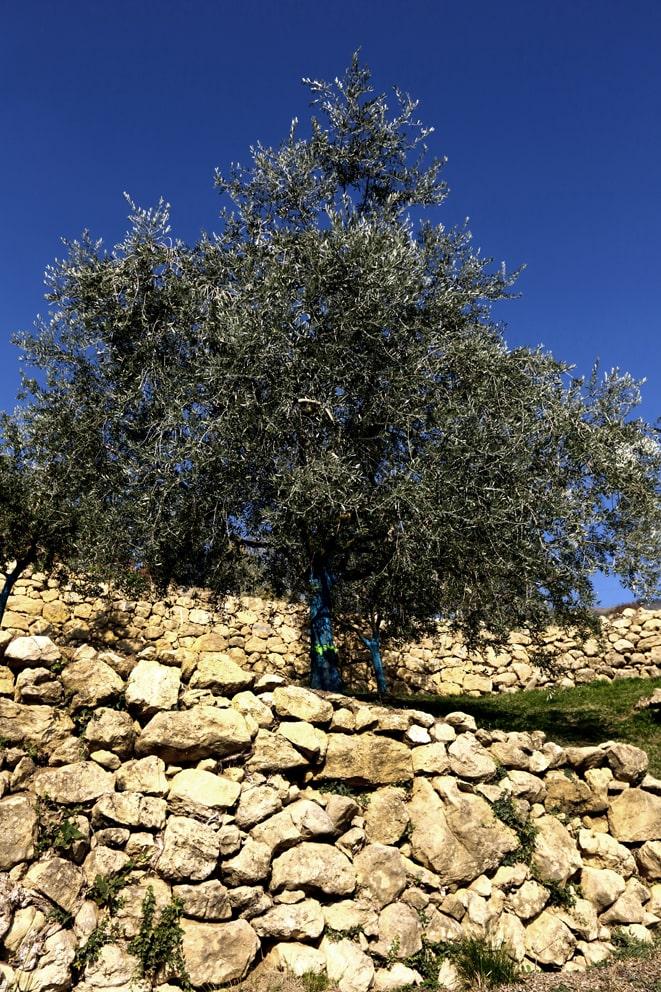 Muretti a secco - colline di marostica