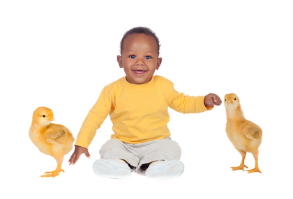 Adorable baby sitting wity two little yellow chickens isolated on a white background