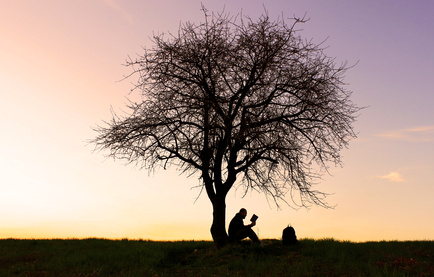person sitting beside tree reading