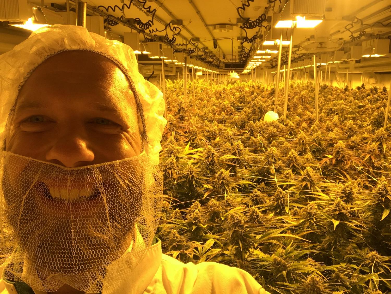 Growing a cannabis business CBD  Hello Cannabis