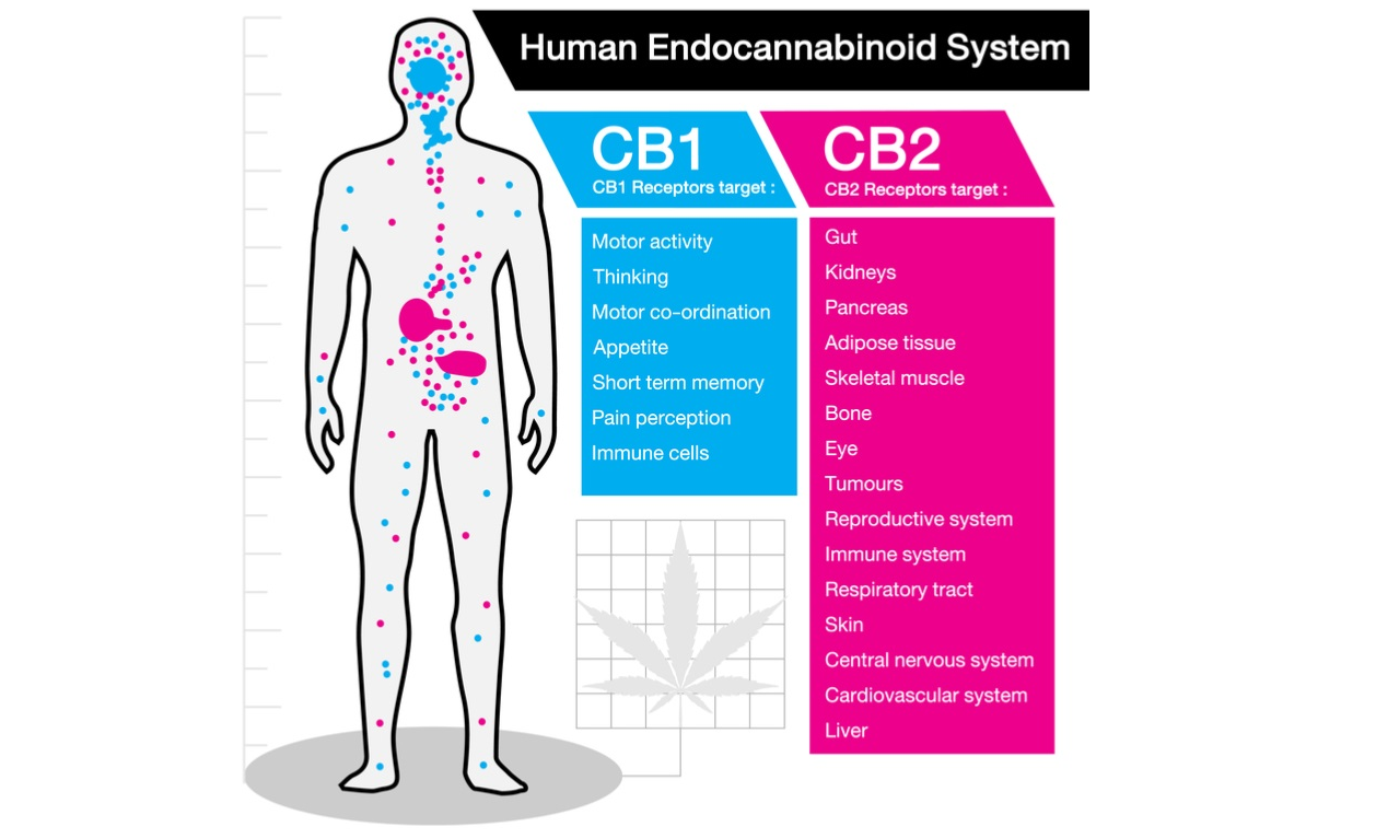 The Truth abAbout Cannabinoids