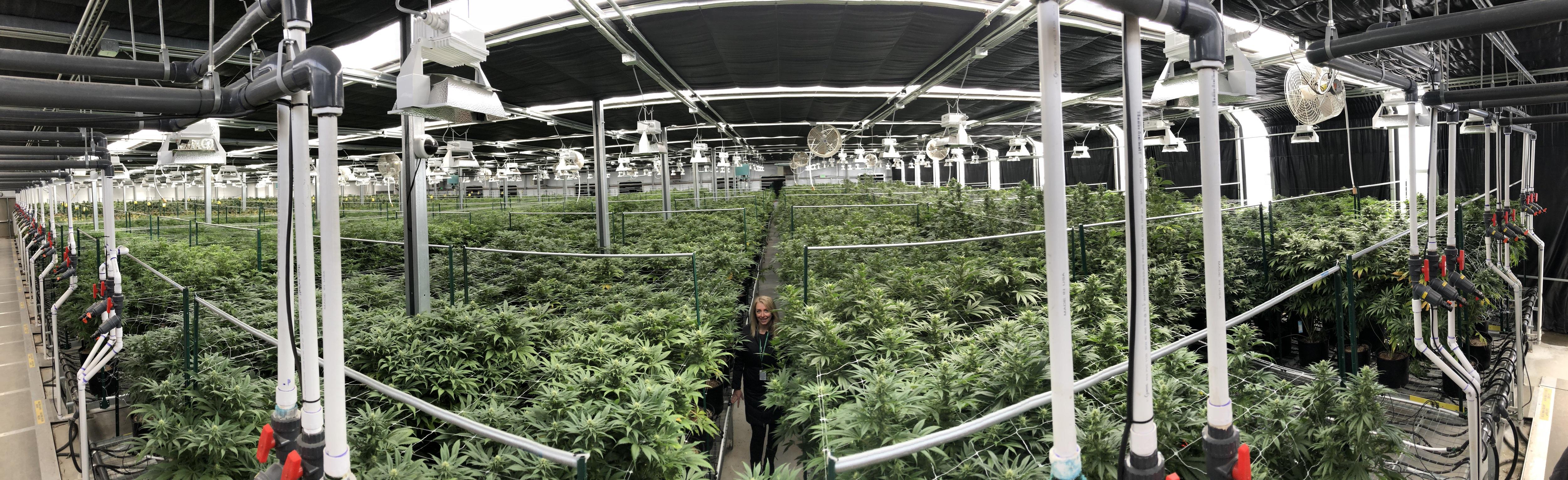 Growing a cannabis tech business CBD Willow Industries