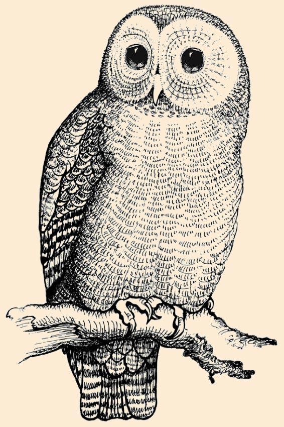 Oakbridge Owl