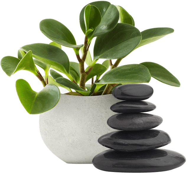 Plant and massage stones