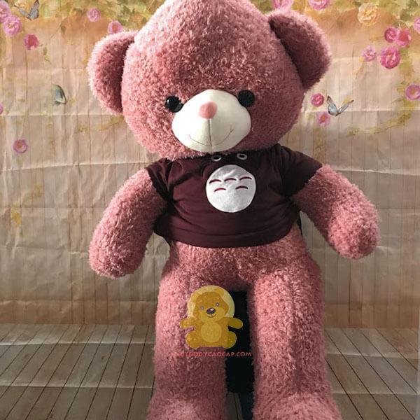 Gấu teddy 1m4 thần rừng toroto